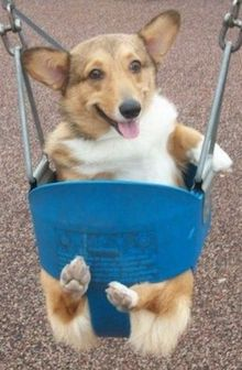 Dog in Swing